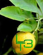 Limonchelo Tour 3