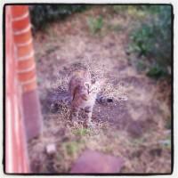 El gato al acecho